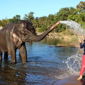 safari_Airline_Staff_Myidtravel_job_India_113