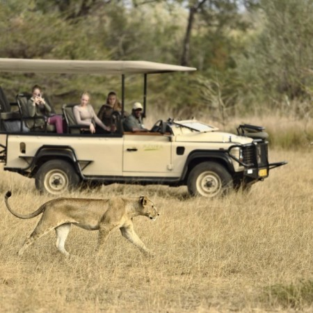 Azura Selous game drive- lioness (002)